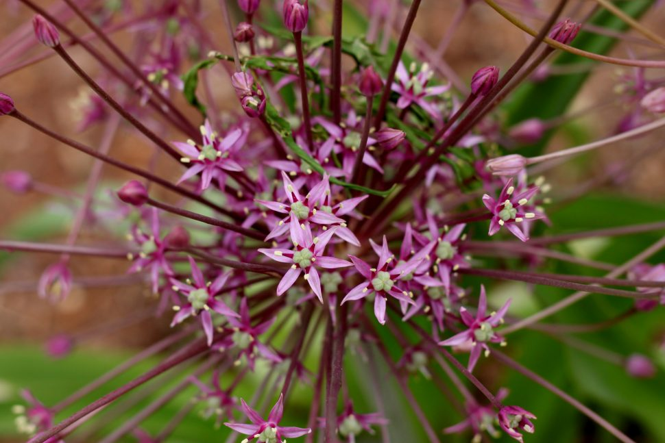 Our Garden_Mini Pink Flowers