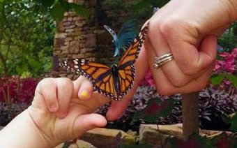 Mother's Day Brunch & Butterfly Release - SOLD OUT @ Nichols Arbor & Purdy Butterfly House
