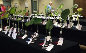 Hostas on Parade - Hosta Show @ Anderson Education Classroom