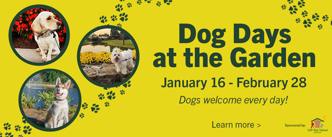 Dog Days at the Garden 1/16/21 – 2/28/21