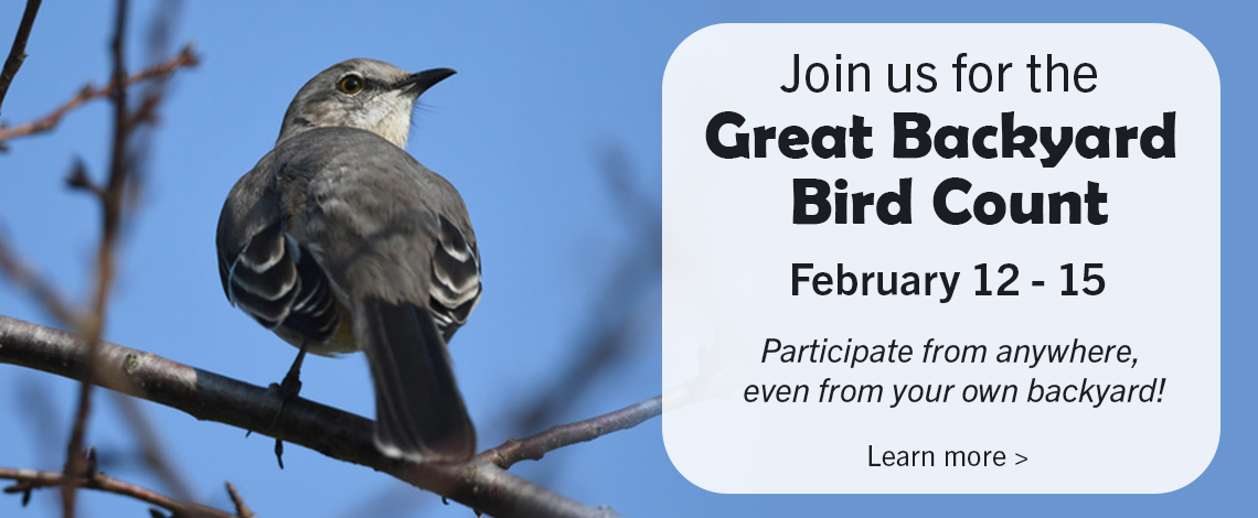 Great Backyard Bird Count 2021